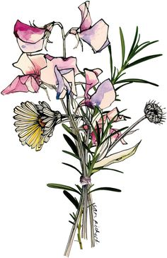Planet Sam: Posy - Sweet Pea, Calendula and Rosemary Sweet Pea Tattoo, Illustration Blume, Botanical Illustration, Flower Outline, Flower Art, Sketch Painting, Love Painting, Daisy Drawing, Botanical Drawings