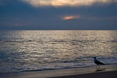 playa Matalascanas Andalucia, Celestial, Sunset, Outdoor, Viajes, Sevilla, Beach, Places, Sunsets