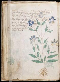 the voynich manuscript, mysterious, beautiful.