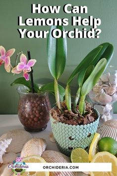 Orchids In Water, Indoor Orchids, Orchids Garden, Garden Plants, Indoor Plants, Patio Plants, Indoor Gardening, Potted Plants, Orchid Plant Care