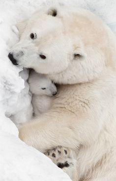 Mother's Love by Olga Scheglova