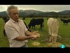 """Documental de TV2 titulado """"Semillas esclavas"""" (Los cultivos transgénicos en España). 43 minutos."""