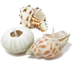 Ready for the beach? Bring it home with candles nested inside seashells.