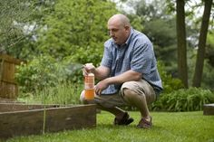 Home remedies for pests in the garden