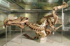 Anatotitan mummy