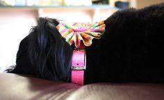DIY Interchangeable Embellished Dog Collar