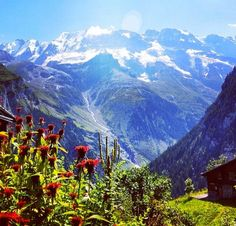 Summertime in the Swiss Alps