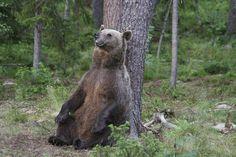 Finland Wildlife Holidays, Wildlife Holidays In Finland | Exodus