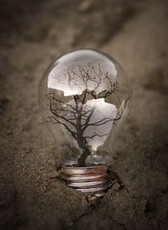 Life Inside the Bulb by Max Emil, via 500px