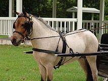 MW-200-Miniature Horse Show Harness-www.ozarkcanada.com