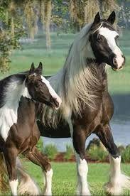 Resultado de imagen para hermosos caballos salvajes
