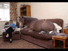 """Photo: Horse on couch. Lambert says: """"Brought inside due to cold."""".... I could see this in my house.... LOL..."""