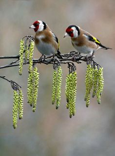 A bird's eye view from a couple of beautiful bird's perched on a branch.