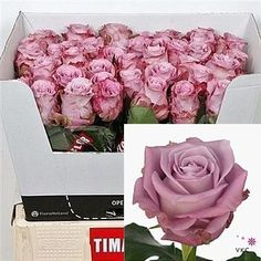 Maritim Roses are lilac & usually available all year round 2018 Wedding Trend: Ultra Violet Purple. For lilac and purple wedding flowers to suit your colour scheme, visit our website at www.trianglenursery.co.uk/fresh-flowers!