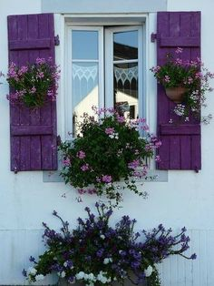 "My favorite ""accent"" color for the garden - purple! Love those shutters!"
