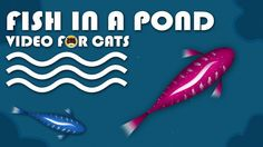 CAT GAMES - Catching Fish in a Pond! Fish Video for Cats. More Videos for Cats: www.tvbini.com  #catTV #TVforcats #tvbini #movieforcats #entertainmentforcats #catgames #videoforcats #cats #pets #videosforcats #catentertainment