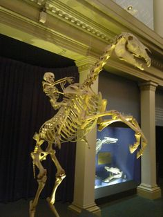 skeleton_on_skeleton_horse_ii_by_karlie_alinta-d4e2h79.jpg (774×1032)