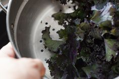 How to Cook Red Kale | Livestrong.com Red Kale, Purple Kale, How To Dry Basil, Appetizers, Herbs, Cooking, Plants, Kitchen, Appetizer