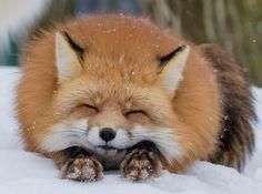 Finding Neverland | beautiful-wildlife: Fluffy by shimapan