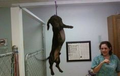 Shut down olga dog spa for hanging dogs
