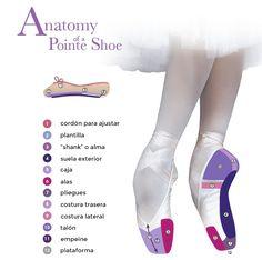 anatomia-partes-punta-de-ballet
