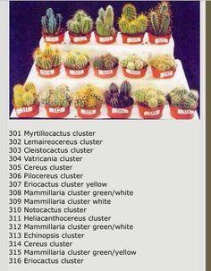 Giving your Indoor Plants Enough Light Cactus Names, Succulent Names, Succulent Gardening, Planting Succulents, Planting Flowers, Cactus House Plants, Rock Garden Plants, Echeveria, Types Of Succulents Plants