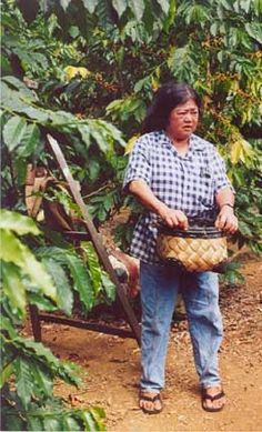 coffee bean-picker at Kona Coffee Living History Farm on Big Island in Hawaii; http://travelswithcarole.blogspot.com/2014/05/travel-articles-kona-coffee-country.html