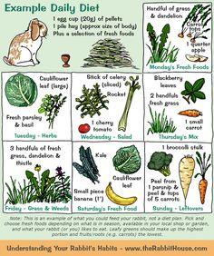 Rabbit menu