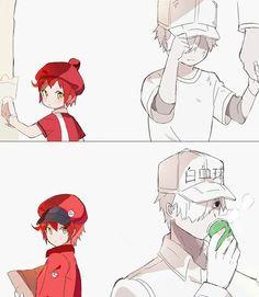 Hataraku Saibou (Cells At Work! Awesome Anime, Anime Love, Blood Anime, Manga Story, Mundo Comic, White Blood Cells, Cute Anime Couples, Anime Shows, Manga Anime