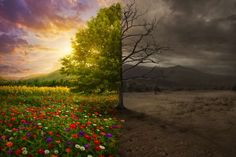 Life and death. Beautiful colorful landscape transforms to desert with no color ,