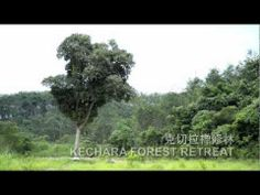 ▶ Kechara Forest Retreat - YouTube