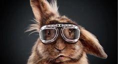 media-markt-rabbit-race-adflash