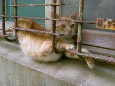 Yoga cat. #cat