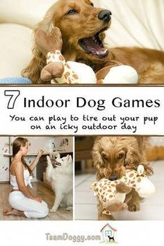 Dog Training These 7 indoor dog games will help tire out your frisky little puppy (big dogs too) when the weather outside is icky. Mentally and physically challenging games to keep your dog fit. Puppy Care, Pet Care, Big Dogs, Dogs And Puppies, Puppies Stuff, Dogs 101, Pitbull, Dog Fun, Pets