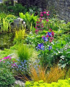 Wildlife pond surrounded by moisture loving plants in Spring.