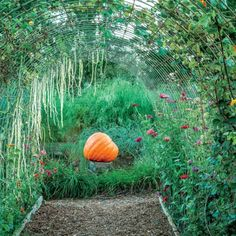 Tip from P. Allen Smith's Secret Veggie Garden: Buy your fairy-tale arbor at a feed store.