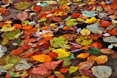 Autumn leaves (Romania) by Adrian Cherciu