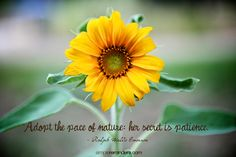 """""""Adopt the pace of nature: her secret is patience."""" Ralph Waldo Emerson Photo by Jenni Young"""