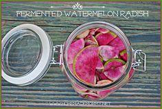 Fermented-Watermelon-Radish-e1377054141480 | by The Adventure Bite