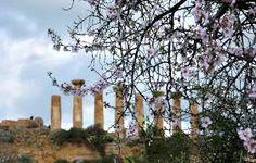 Primavera ...la natura si risveglia.... ed in Sicilia è subito incanto..  Spring is coming...nature awakens .... and in Sicily it is soon enchantment #spring #nature #springinsicily visitsicily