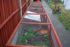 Outdoor tortoise enclosures? - CaptiveBred Reptile Forums, Reptile Classified, Forum
