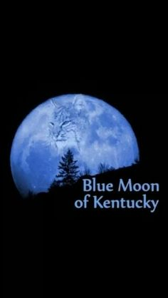 In Kentucky, on a clear night when the moon is full, if you look real close, you might be able to see the face of a WILDCAT in the moon! University Of Kentucky, Kentucky Wildcats, Kentucky Derby, Uk Wildcats Basketball, Kentucky Basketball, Basketball Tickets, Basketball Humor, Uk Football, College Basketball