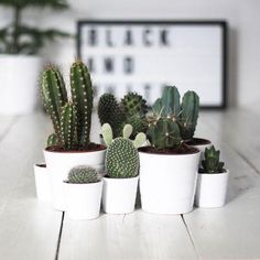 succulents in white pots