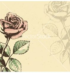 Vintage roses background vector 1211349 - by Lemuana on VectorStock®