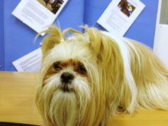 Millie Worried at school! Millies Training School Diaries: Week 5
