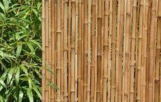 Bamboo screening and bamboo plants