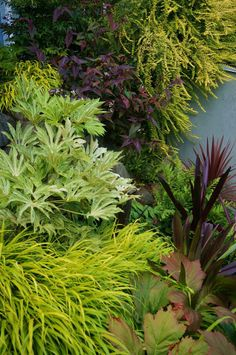 Fatisa 'Spider Web' with Hakonechloa and Persicaria adding drama-by-foliage! — at Seattle, Washington, USA. Photo by Karl Gercens