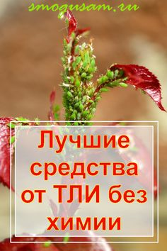 Farm Gardens, Cleaning Hacks, Herbs, Tips, Plants, Lawn And Garden, Herb, Counseling, Medicinal Plants