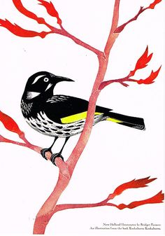 New Holland Honeyeater, Tattoo Inspiration, Printmaking, Childrens Books, A4, Recycling, Birds, Printed, Drawings
