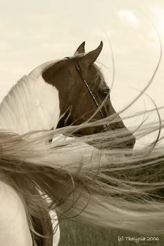 Horse ♥  This photo says it all...grace, wisdom, and majesty.